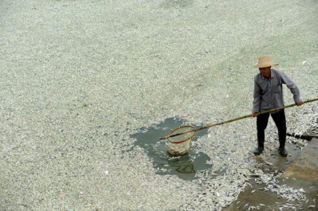 china-dead-fish